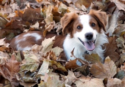 wilco in the leaves (1)